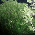 秋の夜の庭