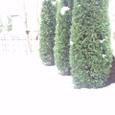 1月21日早朝、家の庭 積雪15-20センチ