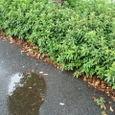 雨の後の道