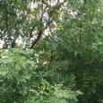 雨の後の樹