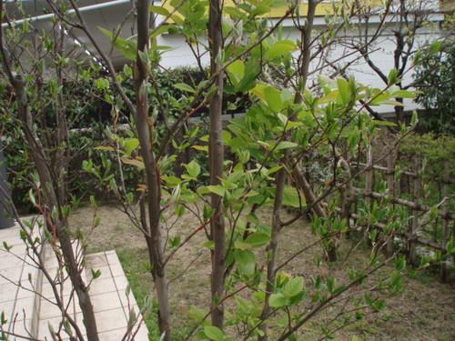 2008年4月の庭