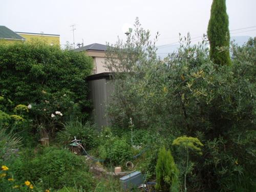 手入れはしてないけどハーブばっかりの庭