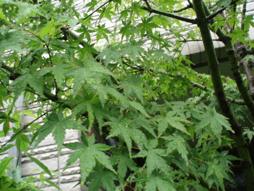 2008 梅雨