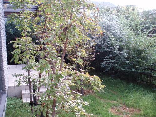 秋の雨の朝に