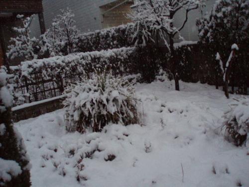 1月20日の大雪の我が家