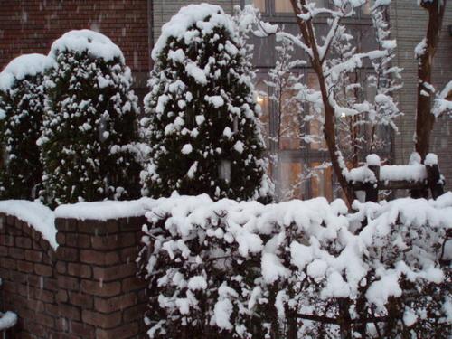1月20日の大雪の我が