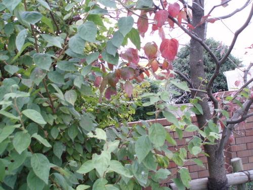 11月の秋の庭