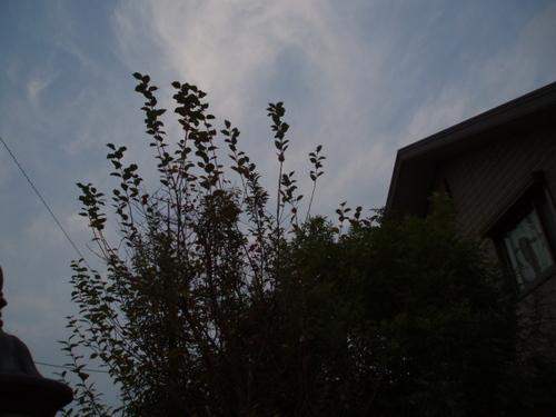 11月の夕方の秋空