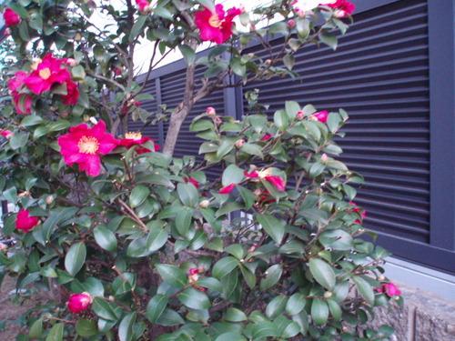 クリスマスの日の我が家の庭