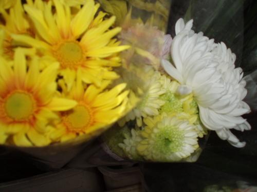 11月11日 クッションマム 友への記憶