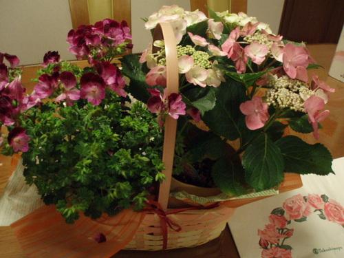 1月21日 ピンクカーネーション 熱愛の告白