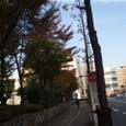 11月 りんとたつ市内の紅葉