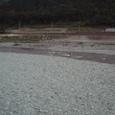 秋の朝の加茂川