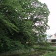 梅雨の中、西条高校のお堀