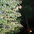 鷹丸公園の夜