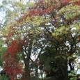 西条高校、陣屋後のお堀の晩秋・・・桜の紅葉