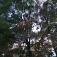 西条高校、陣屋後のお堀の晩秋・・・桜