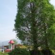 2008年4月の児童公園