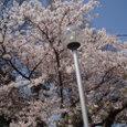 葉桜に近い武丈
