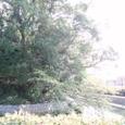 御陣屋周辺の堀(西条高校の裏)