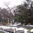 大雪の1月22日の西条高校の裏