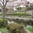 市内を流れる桜と川と