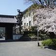 西条高校校門の桜