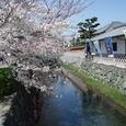 市の中に川と桜