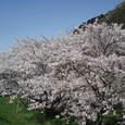 八堂山と桜