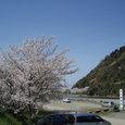 八堂山と桜 武丈公園