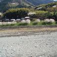 山沿いの桜