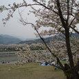 満開の武丈公園と加茂川と人々