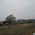玉津 東中へ行く道での桜