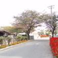 11月の西条小学校
