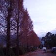 クリスマスの日の鷹丸公園