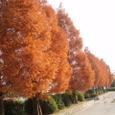 児童公園の紅葉