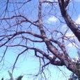如月の空 光の春 山根公園