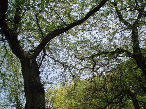 2008年4月 山根公園