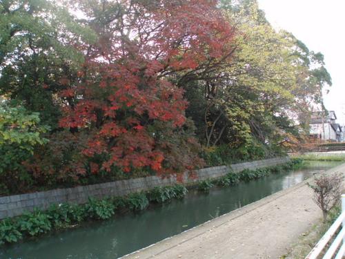 西条高校、陣屋後のお堀の晩秋・・・桜紅葉