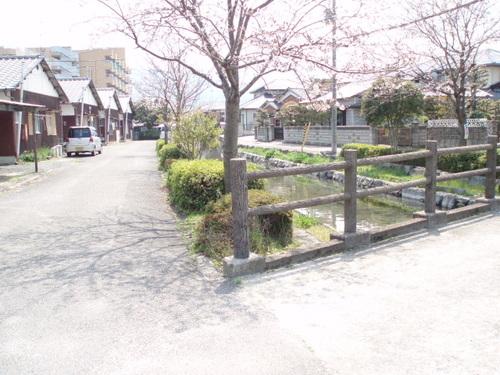 自宅の近く。四国の道の桜