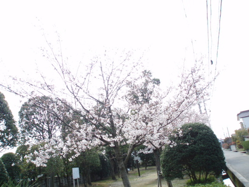 2008年 秋吉公園