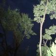 3、柿本人麿  あしびきの山鳥の尾のしだり尾のながながし夜をひとりかもねむ