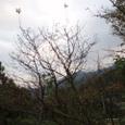 94 参議雅経 み吉野の山の秋風さ夜ふけてふるさと寒く衣うつなり