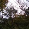 5、猿丸太夫 奥山にもみじふみわけ鳴く鹿の声きく時ぞ秋は悲しき