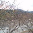 87  寂蓮法師 村雨の露もまだひぬまきの葉に霧たちのぼる秋の夕ぐれ