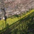 野辺へ出てきますと春先の事で空にはヒバリがピィーチクパァーチクさえずって、