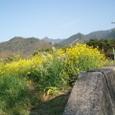 菜の花や月は東に日は西に 蕪村
